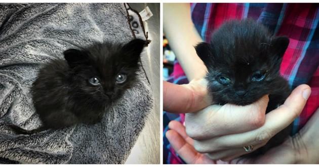 petit chaton noir