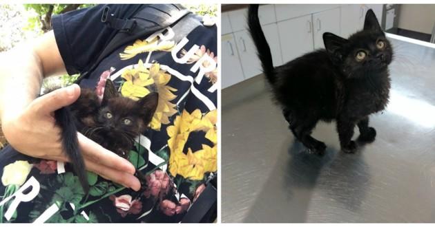 chaton noir sourd