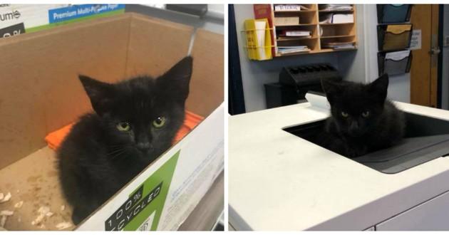 chaton noir boite