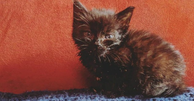 Elle sauve un petit chaton, ses poils tombent et elle n'en revient pas de ce qui se passe ensuite