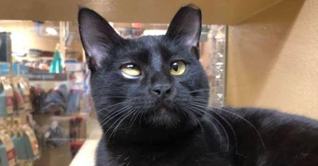 chaton noir avec un défaut oculaire