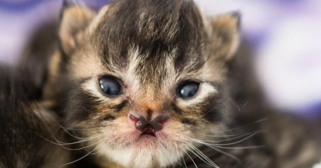 chaton fente palatine