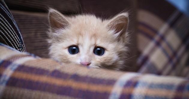 chaton apeuré