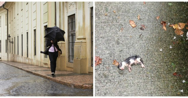 chaton pluie