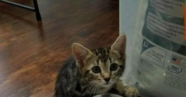 chaton abandonné porte
