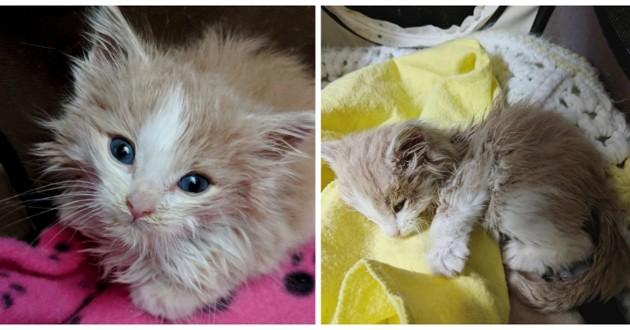 chaton roux bébé
