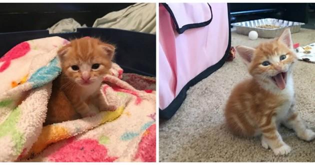 chaton roux mignon