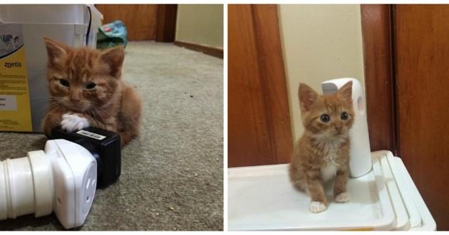 tout petit chaton roux