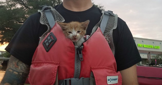 chat gilet sauvetage