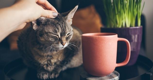 chaton en train de se faire caresser