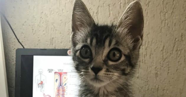 Fille avec minuscule chatte