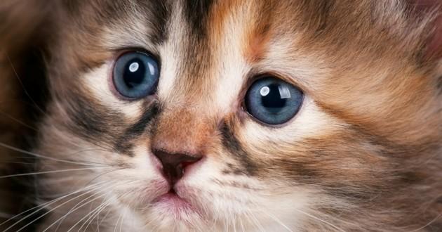 chaton triste