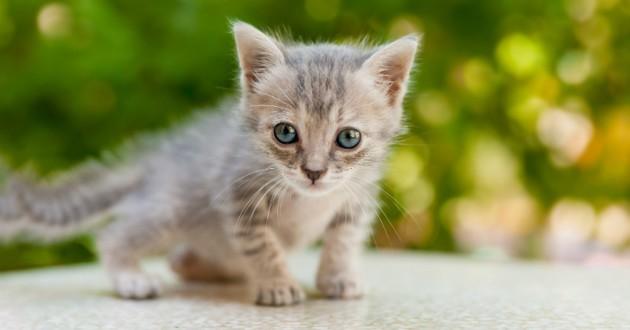 Etats-Unis : un tueur en série de chats condamné