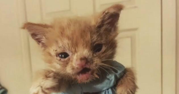 chaton roux fente palatine