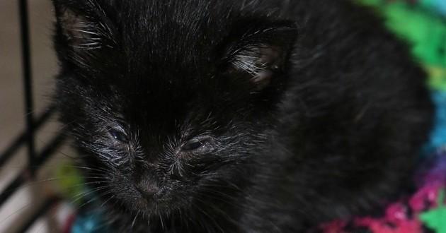 chat noir louche