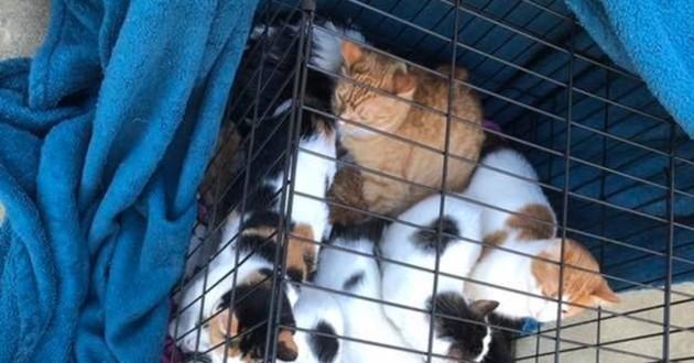 cage pleine de chat