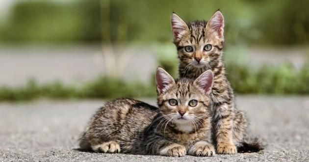 chatons errants
