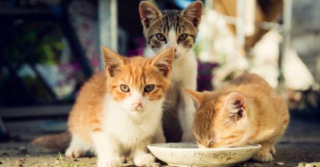 des chatons errants qui mangent