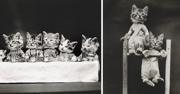 20 photos de chats datant d'il y a 100 ans... ils étaient déjà d'adorables stars !