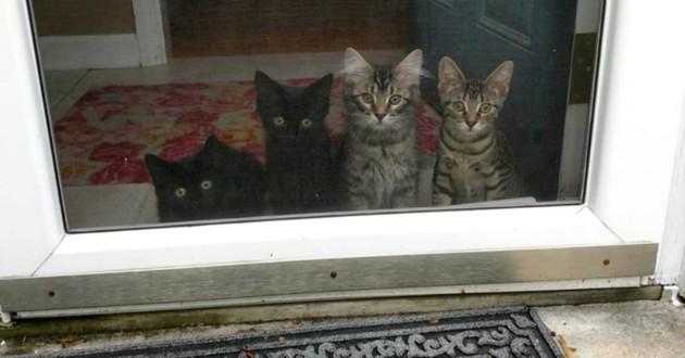 chatons à la fenêtre