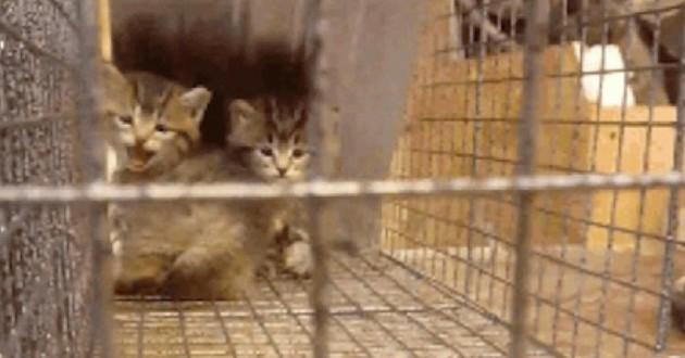 chatons sauvés terrifiés