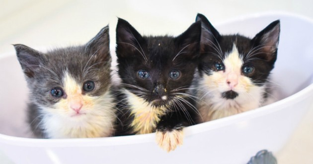 chatons choux