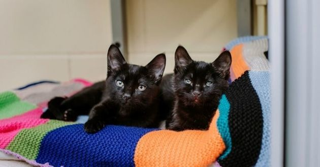 deux chatons noirs