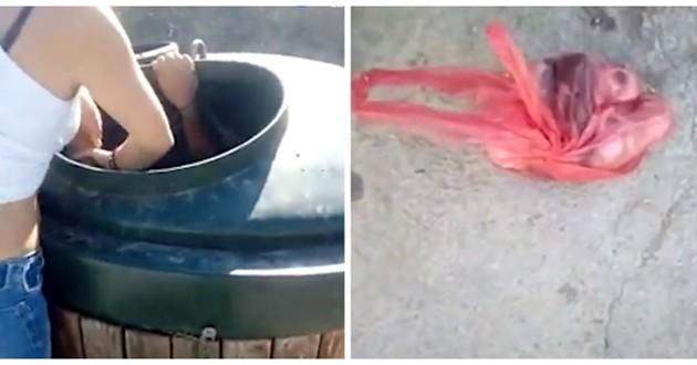 chatons poubelle
