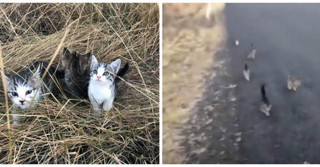 chatons abandonnés rue