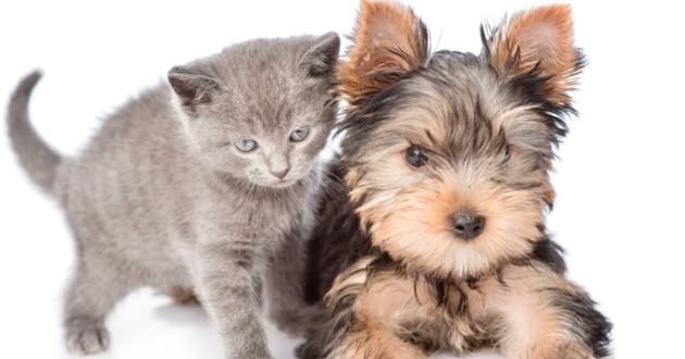 La Grande-Bretagne interdit la vente de chiots et de chatons dans les animaleries