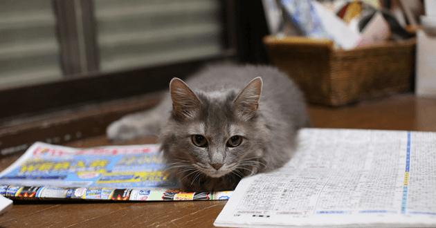 Mon chat n'est pas propre, que faire ?