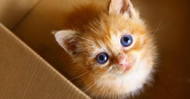 La science l'a prouvé : votre chat tente bel et bien de parler avec vous