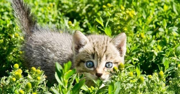 chaton enragé