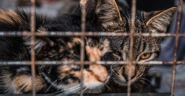 chats abandonnés en cage