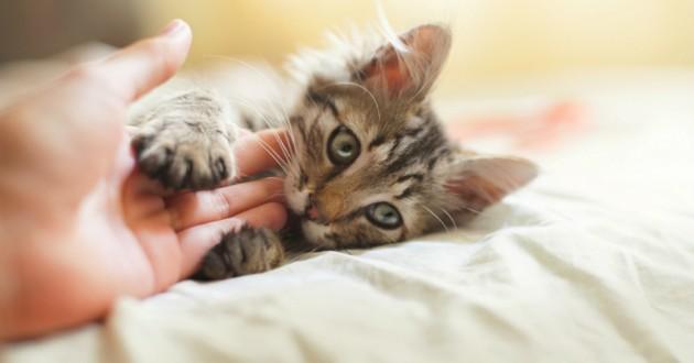 chaton calins