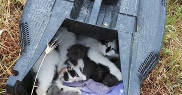 chats dans une tondeuse