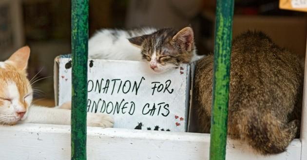 chats abandonnés dons