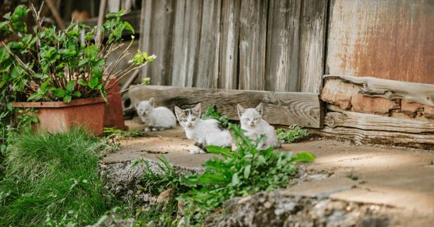 L'homme prend soin des chats abandonnés après la catastrophe de Fukushima