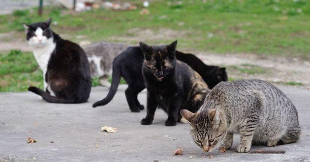 des chats errants qui mangent
