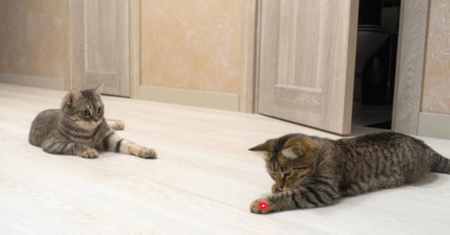 chats jeux