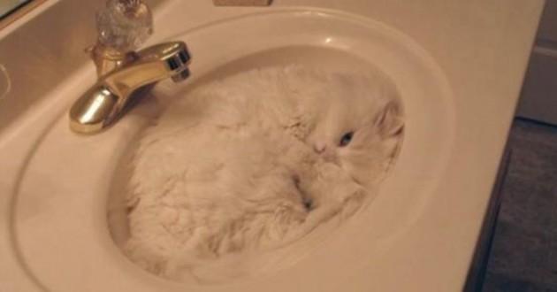 chat lavabo