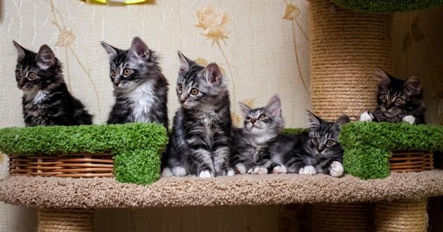 Bon jeudi Chats-maison-fb-599d708772aea