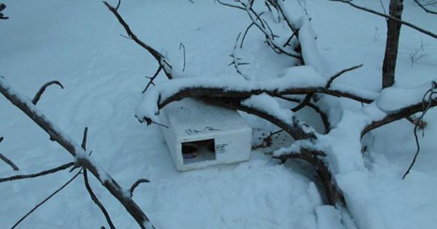 chat boite neige