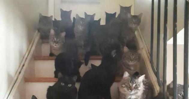chats sur un escalier