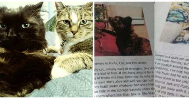 chat pet sitter