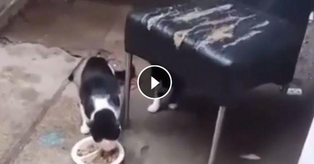 chats coincés maison roubaix