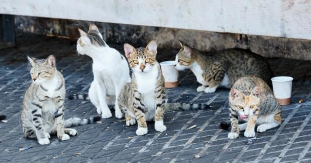 chats errants rue