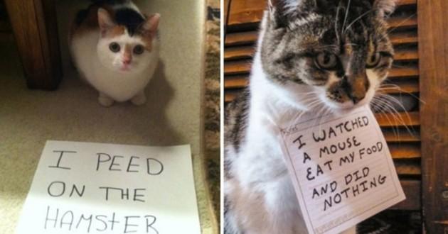 15 chats pas sages, affichés sur les réseaux sociaux par leurs maîtres