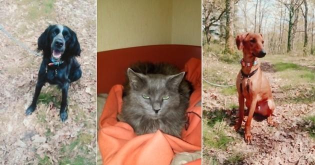 chat chiens adoptés