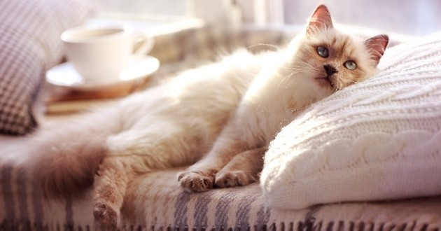 6 trucs faire absolument pour rendre votre chat heureux en appartement web wamiz. Black Bedroom Furniture Sets. Home Design Ideas